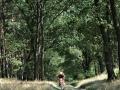 Waldwege[2]